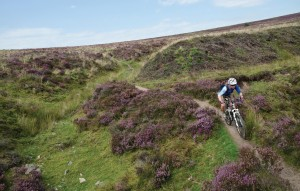 Dartmoor south west great featured