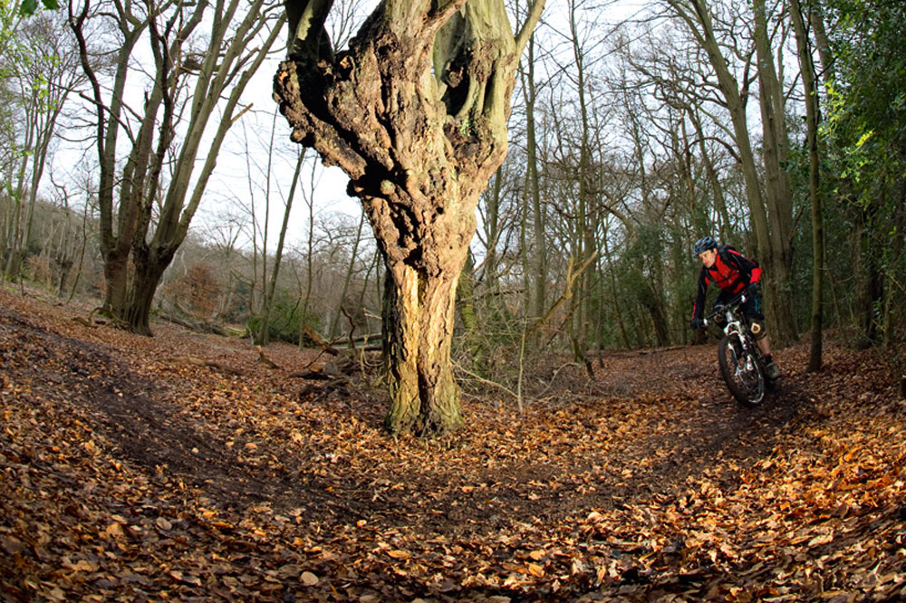 Best Place To Mountain Bike Near London Epping Forest