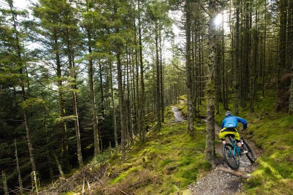 whinlatter forest lake district trail centre guide   mbr