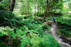 hopton woods
