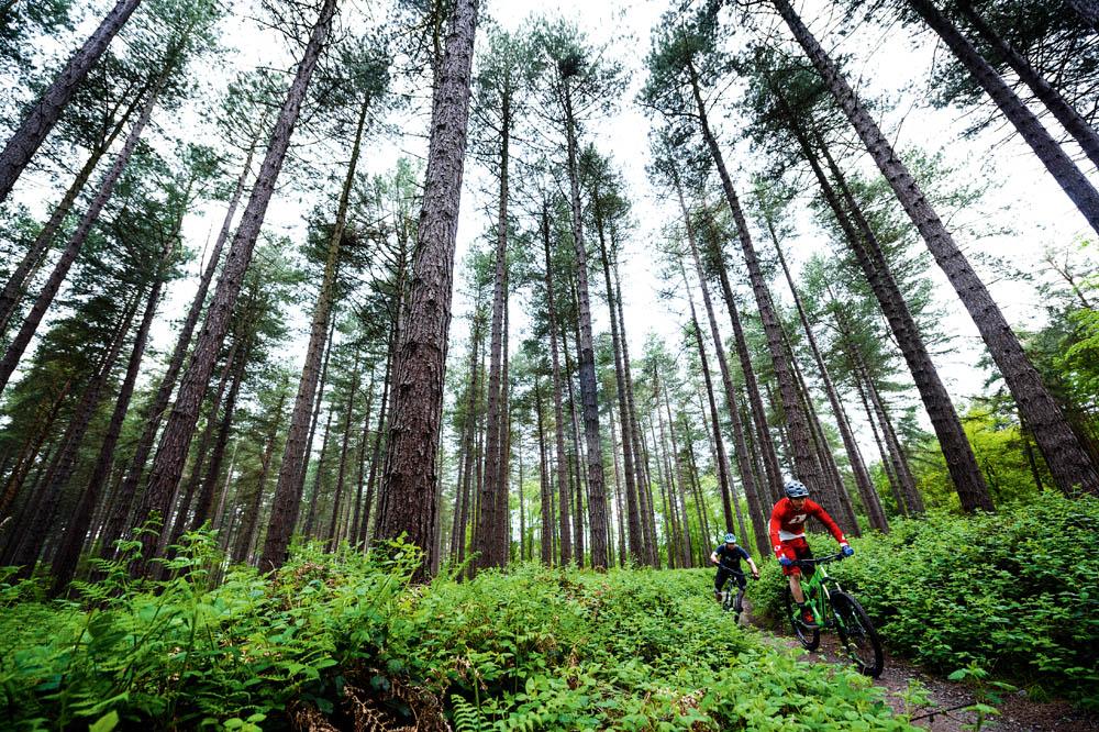 c7cf94d56a1 Sherwood Pines, Nottinghamshire trail centre guide - MBR