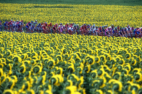 Eyes on the Tour de France