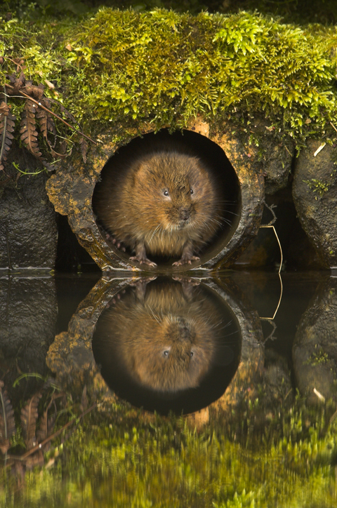 Shell Wildlife Photographer of the Year