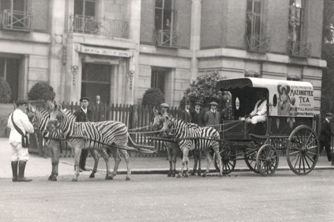 Unseen London Zoo