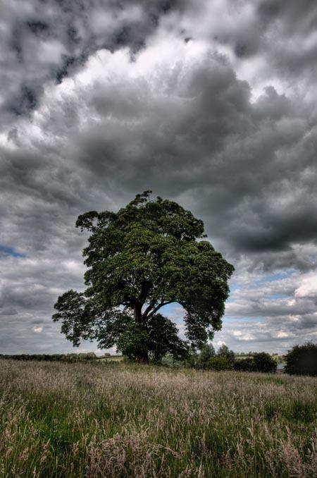 Lone Tree, John Rhodes