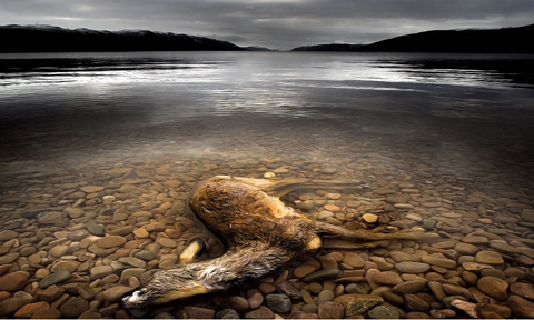 © Colin Campbell, courtesy Sony World Photography Awards 2009