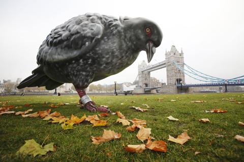 Panasonic pigeon