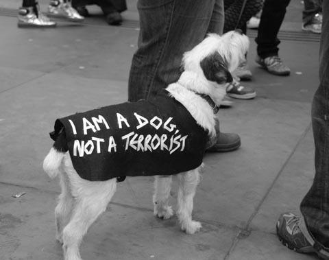 Dog not a terrorist