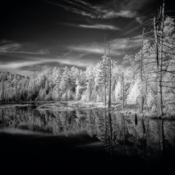 Image of trees taken with infrared film