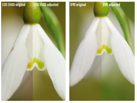 550 vs d90 snowdrops. I had to increase the exposure by 0.67EV with the Canon EOS 550D, while the Nikon D90 got the exposure correct by itself. Neither camera managed to get the green of the snowdrop quite right, but it was soon adjusted using Photoshop