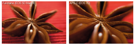 5d vs 7d comparison images. The extra magnification of the APS-C-format sensor gives this macro image more impact.
