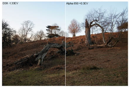 Nikon D3x vs Sony Alpha 850 evaluative metering sample images. How the cameras performed in evaluative metering mode varied from scene to scene. Here I had to reduce the exposure time of the D3X image as it was too light, while I had to lighten the shot from the Alpha 850.