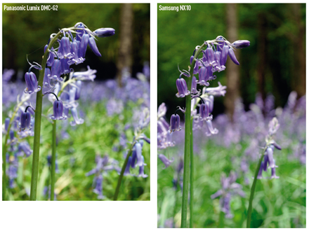 Panasonic Lumix DMC-G2 vs Samsung NX10 sample images. In spot metering mode there was no difference in how the cameras exposed this scene.