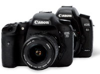 Canon 5d vs Canon 7d