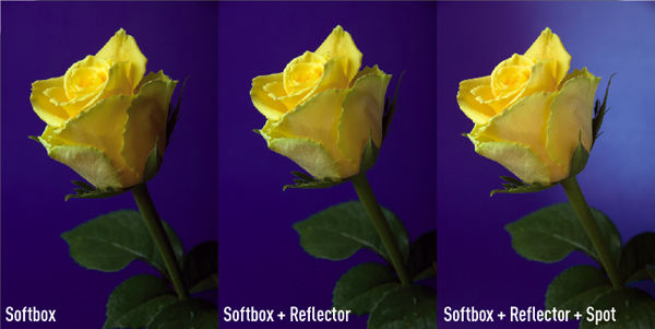 Lighting flowers: softbox, softbox and reflector, softbox with reflector and spot