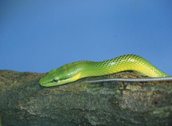 Zoo_snake