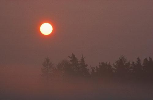 sun through mist