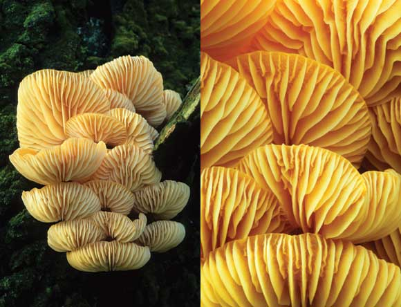 Fungi macro image