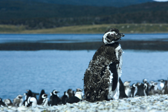 Guide-to-Telephoto-Lenses-Penguin