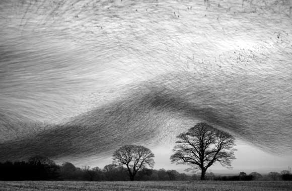Starling Wave