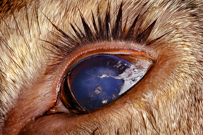 Photo Insight with Jim Brandenburg - Dead Deer's Eye ...