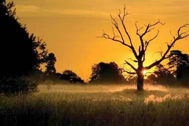 Kevin Day landscape image