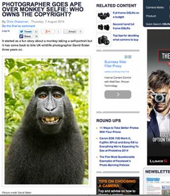 AP monkey story