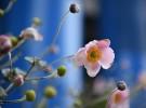 Nikon D750 sample image - flowers