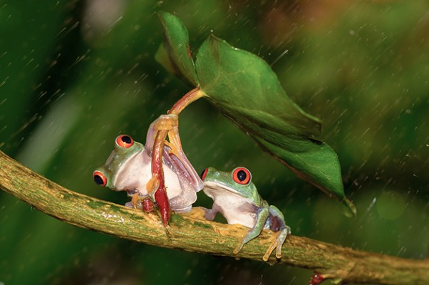 How to Take Care of Frogs