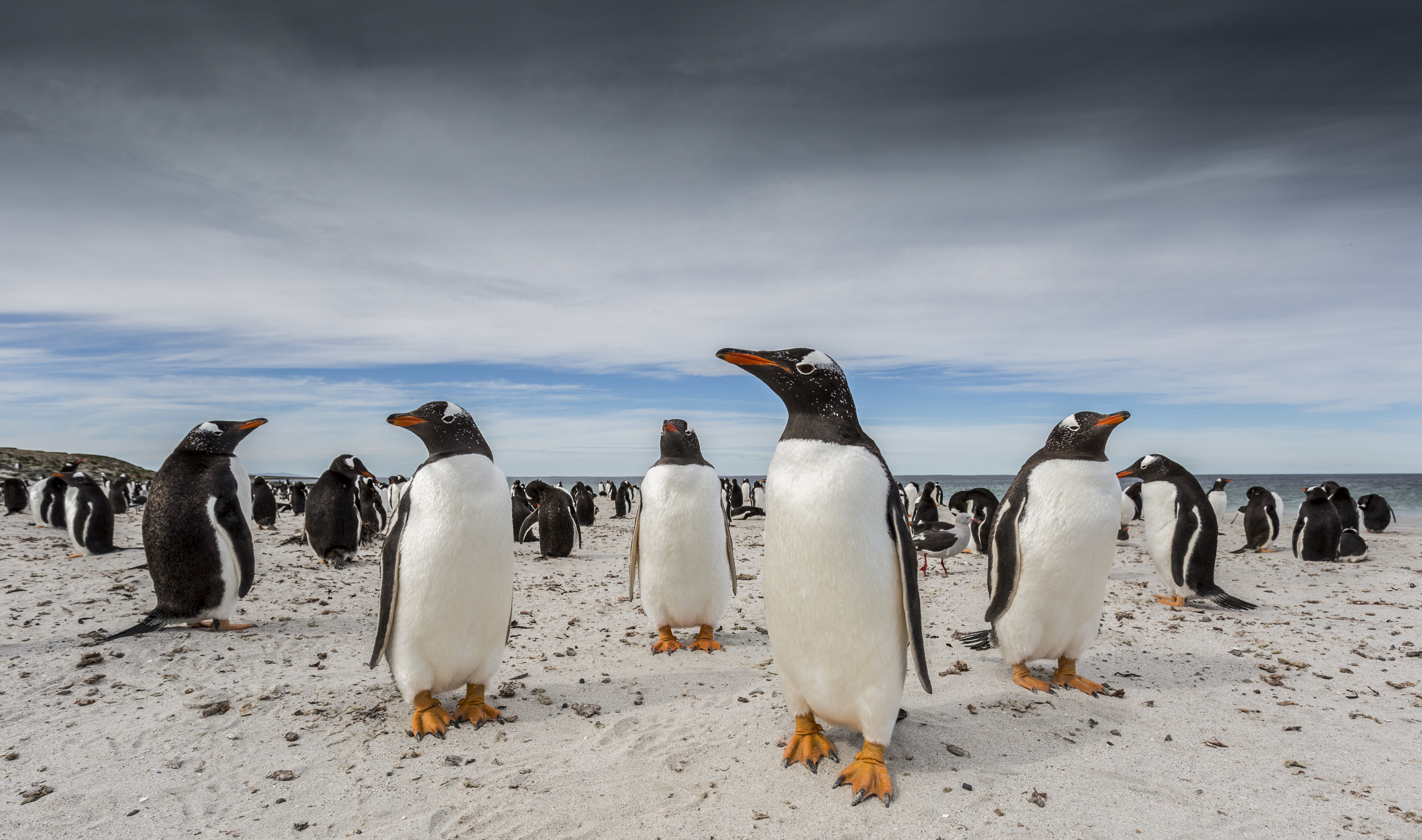 pictures national geographic travel photography competition