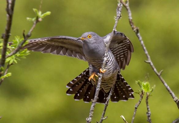 Amateur wildlife photos