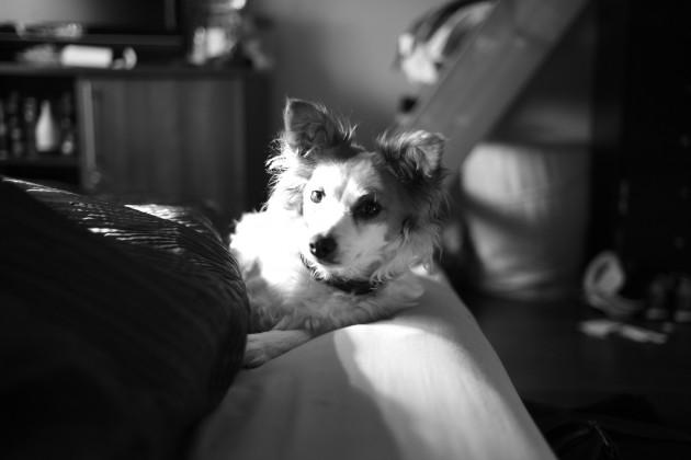 Leica M Monochrom (Typ 246) Sample Image Gallery - Amateur ...