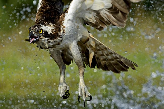 Photographing birds in flight - Amateur Photographer