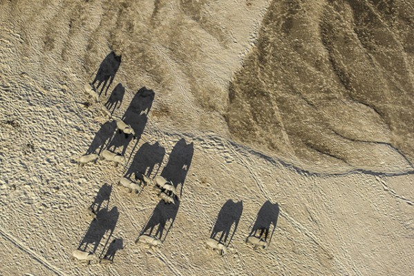 Herd of elephants charges to victory in wildlife photography contest