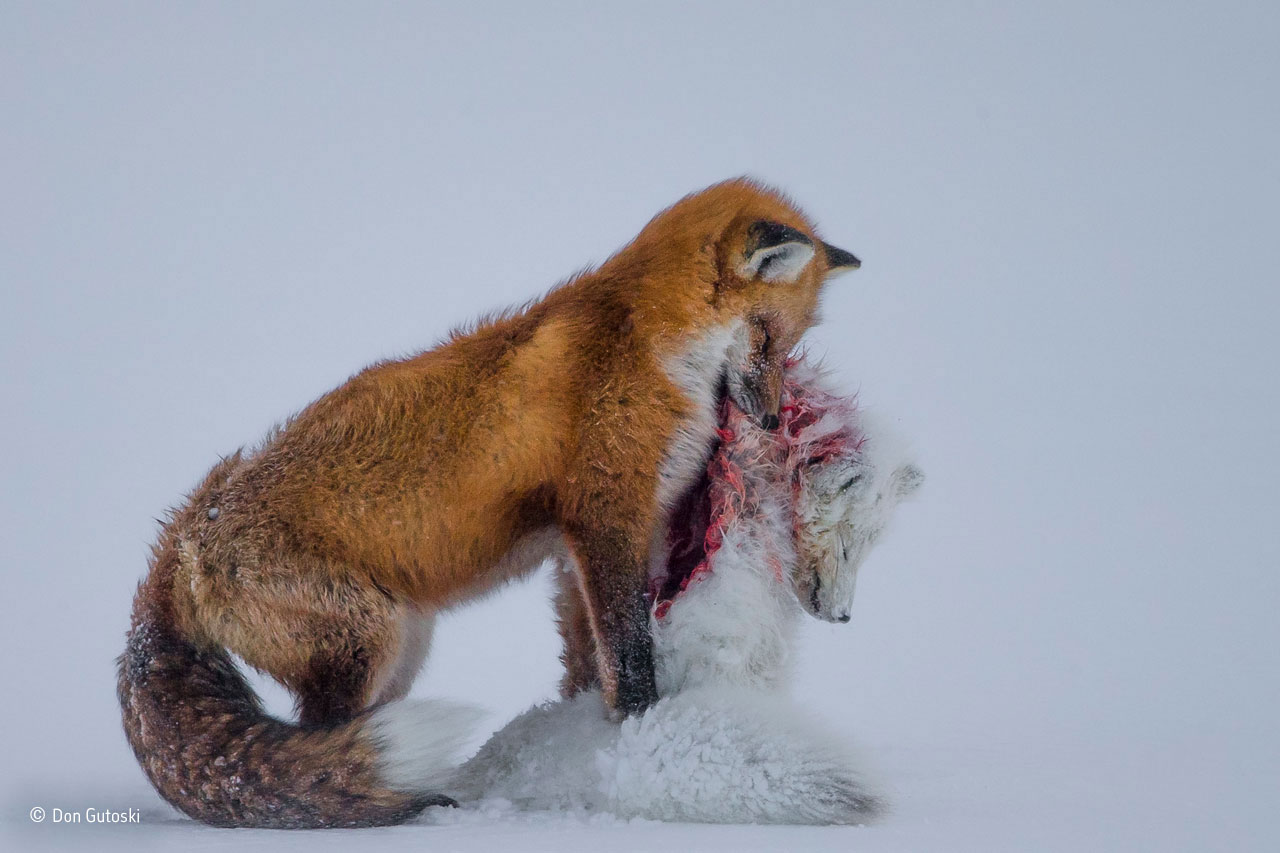 Amateur wildlife photographer year