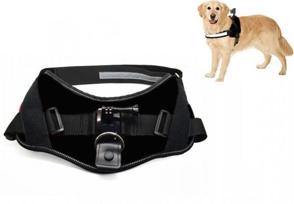 ACTIVEON 360 Dog Vest_with dog.web