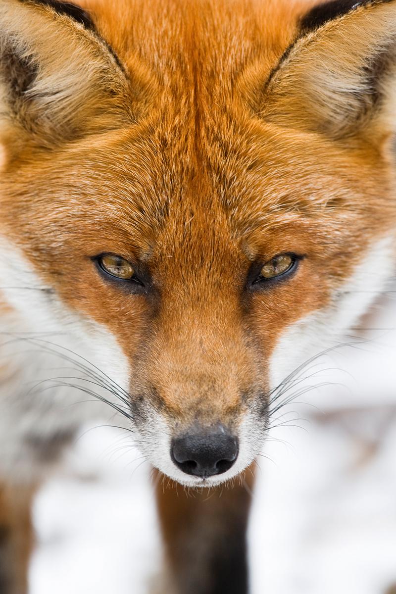 Photographing wildlife by understanding animal behaviour