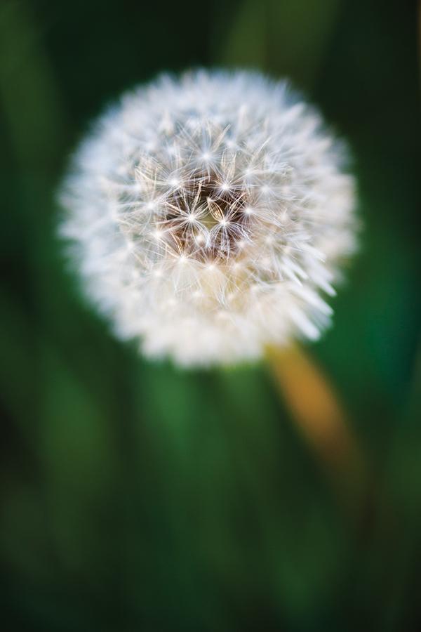 Using Live View on your Canon DSLR - Amateur Photographer
