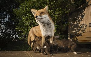 sam hobson british wildlife photography