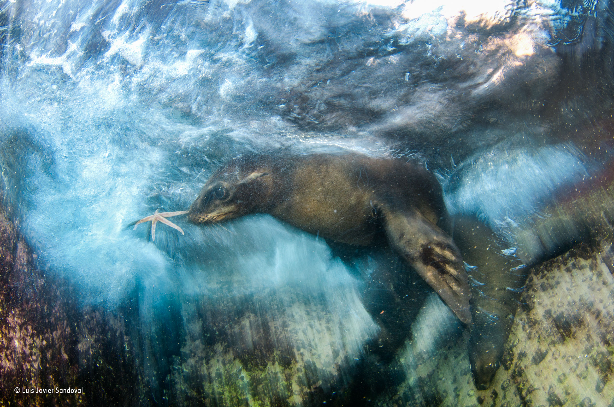 Wildlife Photographer Of The Year 2016 Winners Unveiled