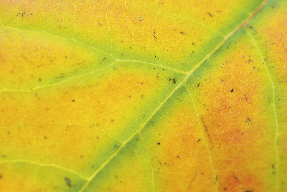 autumn macro keep it clean