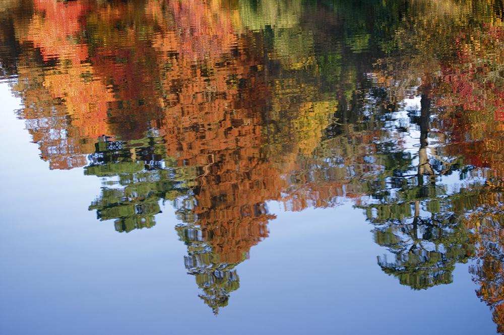 autumn macro tracy calder sheffield park