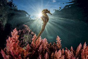 The Seahorse by Marco Gargiulo