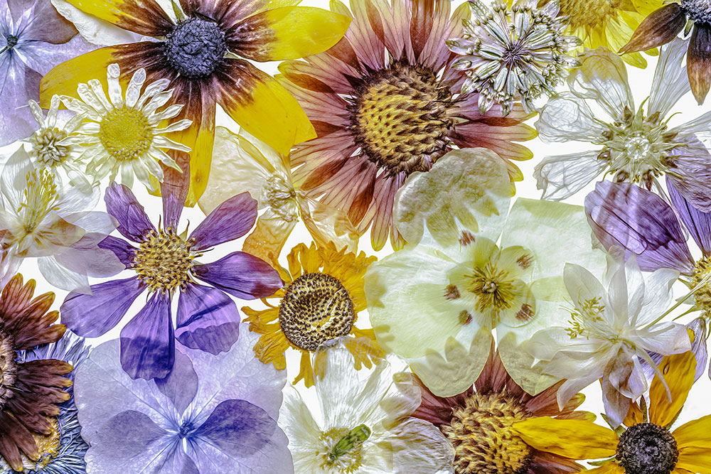 Mandy Disher Florals Pressed flowers