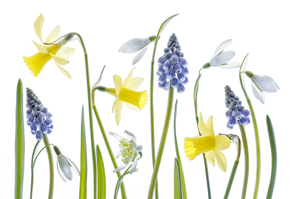 Mandy Disher florals Spring flowers