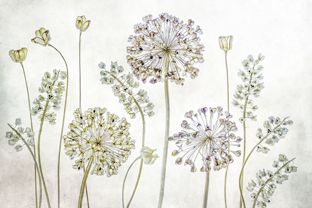 Mandy Disher florals change background