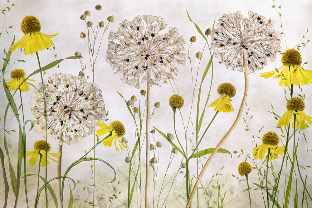 Mandy Disher florals try oil paint filter