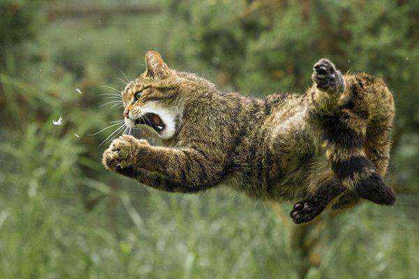 Richard Peters wildcat