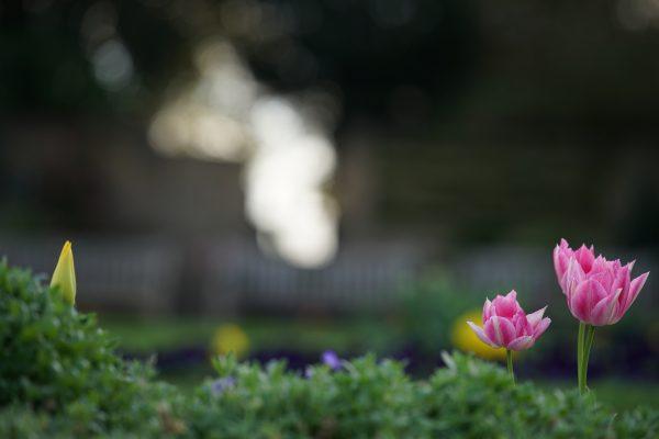Plant life, captured with Zeiss Batis 135mm