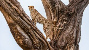 Frans Lanting's new book celebrates four decades photographing Africa